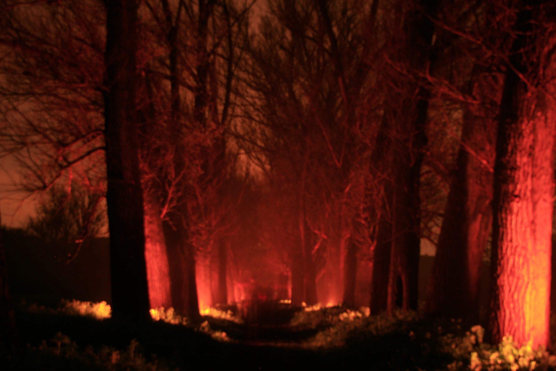 Нічне фото коридору із дерев на фестивалі ARTPOLE.LU